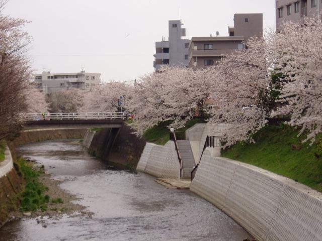 桜2008 001.jpg