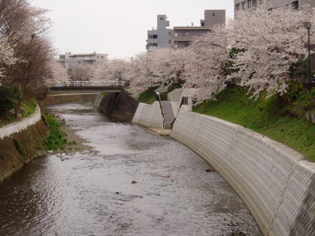 桜2008 003.jpg