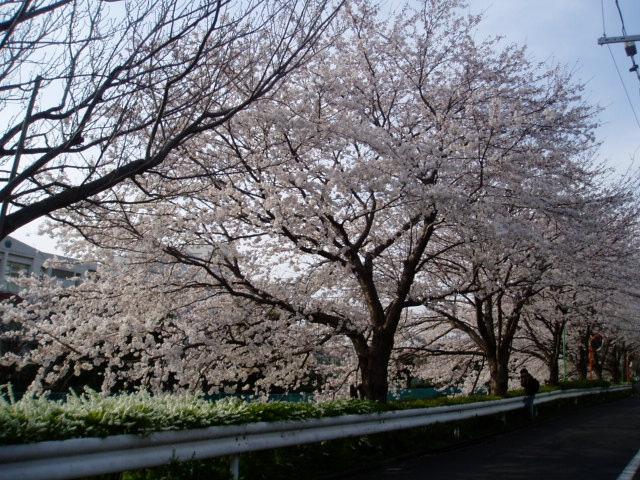桜2008 010.jpg